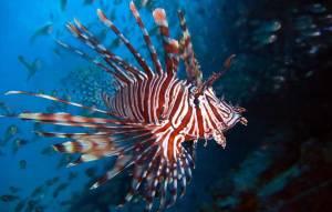 diving wstęp 2