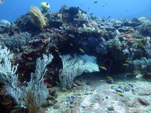 diving wstęp 3