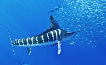 merlin - koh chang nurkowanie po polsku tucatravel