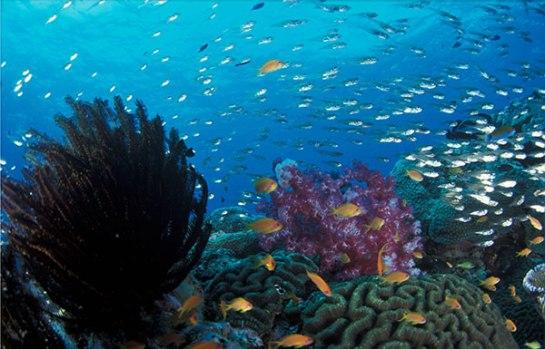nurkowanie tajlandia - tucatravel